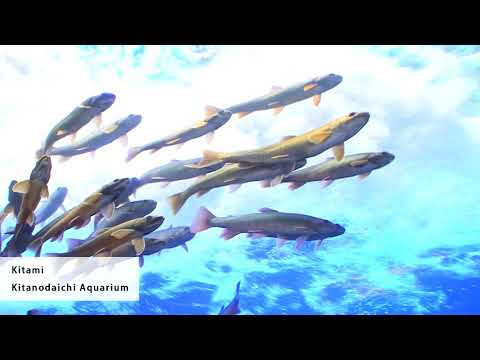 "[Hokkaido Travel Kitami] Awesome aquarium that is both the ""best in Japan,"" ""first in the world!"""