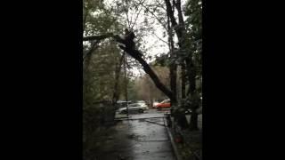 видео Удаление аварийных деревьев в Москве и Московской области