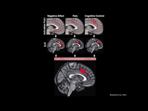 Distinct Regions of mPFC Process Pain and Cognition