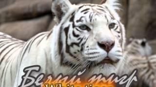 Охрана природы и природопользование(Фильм (Pinnacle 14) о красоте природы, о катастрофах, о том, что природу нужно беречь. Фильм создан при участии..., 2014-04-09T21:16:23.000Z)