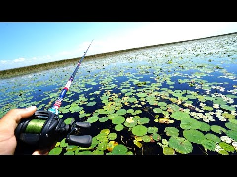 Fishing for GIANT Swamp Bass