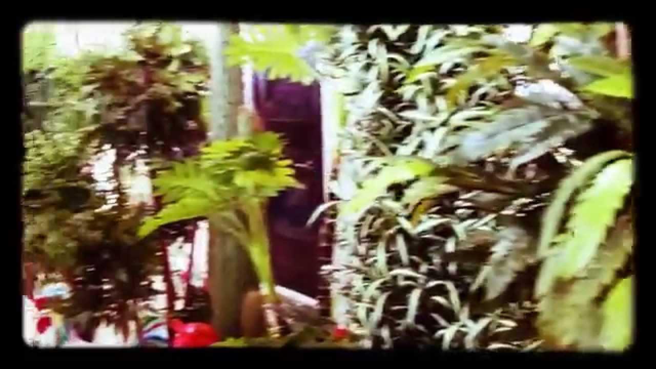 25 авг 2010. Леопардовая лилия англичан, змеиная кожа американцев, африканская конопля немцев, тещин или щучий язык русских – все это относится к сансевиере. И хотя. Почвенную смесь можно приготовить из дерновой земли, торфа и песка (3:1:1) или купить готовую землю для роз.