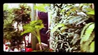 Искусственные деревья оптом Декоративные купить для интерьера квартиры ландшафта сада дачи дома(, 2015-04-21T18:12:23.000Z)
