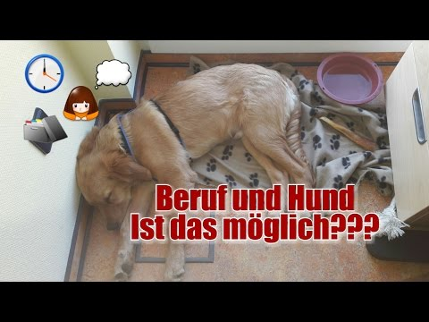 Single mann mit hund