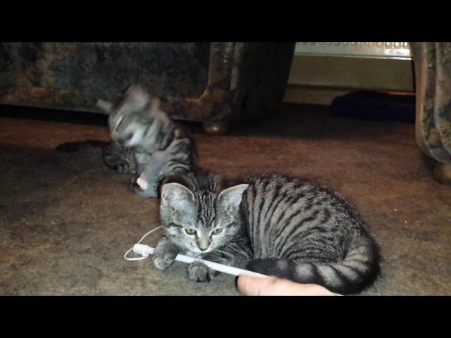 Katzenbabys Alina und Barney