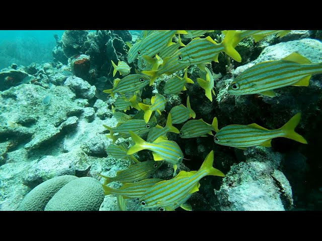 BEAUTIFUL FISH IN ARUBA