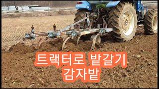 트랙터로 밭갈기 감자밭 만들기
