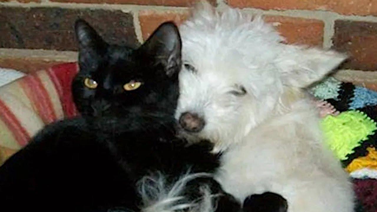 心に傷を負った老犬。年老いた黒猫の無償の愛で心を開き幸せを取り戻す【感動】