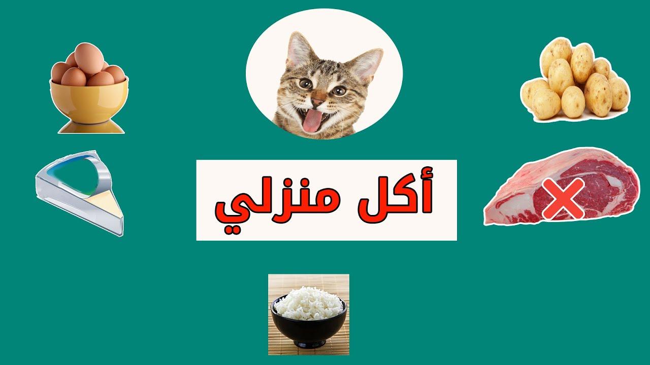 هذه 5 وجبات تحبها القطط أكل القطط Youtube