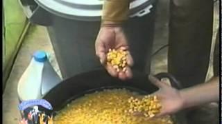 Forraje hidropónico de maíz- Granja Integral Dimensional (1)