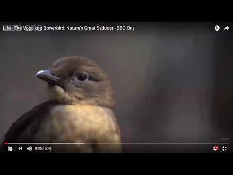 Engineering Design Activities for Birds