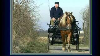 Willem Vermandere-Blanche en zyn peird (2)