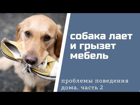 Вопрос: Как отучить собаку устраивать погромы?