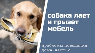 Как отучить собаку лаять и грызть мебель?