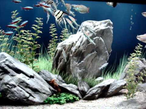 tema de aquario para pc