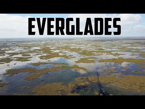 FLORIDA EVERGLADES AIRBOAT TOUR! - And Other Outdoor Activities To Do In Miami!