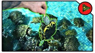 УКУС КРАСНОУХОЙ ЧЕРЕПАХИ! Сможет ли черепаха нанести повреждения?