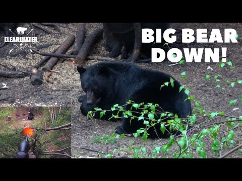 First Time Bear Hunter SHOOTS BIG BEAR!!! Canadian Black Bear Hunt