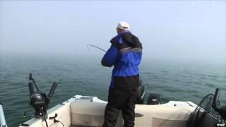 Fishful Thinking - Glow Spoon Salmon