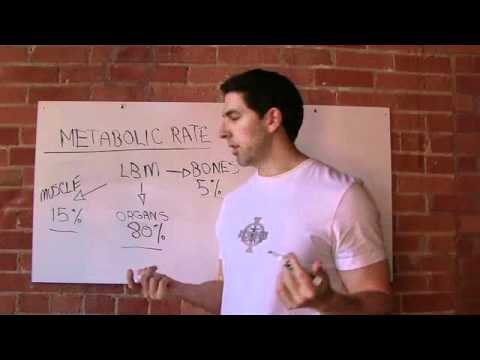 Debunking The Myth About Metabolic Rate