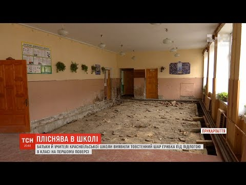 ТСН: Школу на Прикарпатті з'їдає грибок
