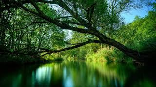 Nature Ringtone Mp3 Download - Orange Free Sounds