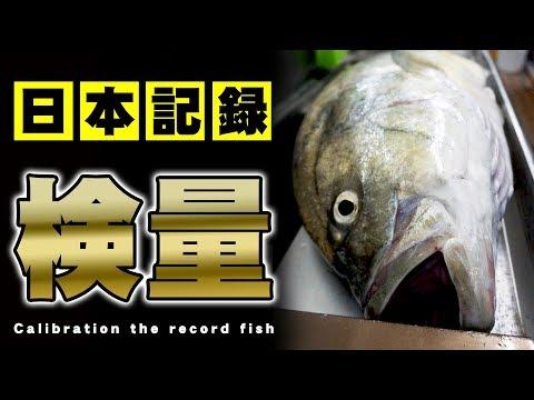 検量日本記録のオニヒラアジが本当に日本記録なのかを確かめる!後編TJ