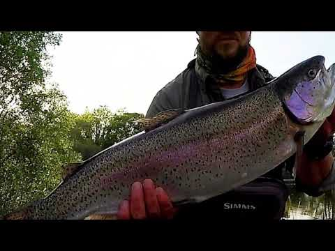 Preview: Huge Rainbow Trout On Super Light Tackle @ Innis Fly Fishery Cornwall