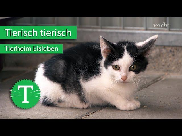 Tierisch tierisch aus dem Tierheim Eisleben   Sendung vom 14.10.2020   MDR