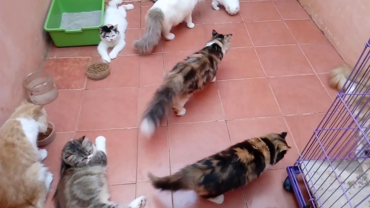 Gambar Kucing Anggora Lucu Untuk Wallpaper Majalah Cat & Dog