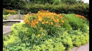 видео клумба непрерывного цветения из многолетников