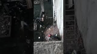 pompieri salvare caine focsani