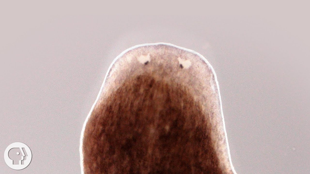 want-a-whole-new-body-ask-this-flatworm-how-deep-look