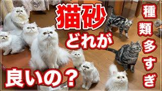 【猫砂】種類が多くて結局どれを選べばイイの?【猫のトイレ】
