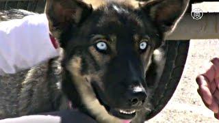 Пёс, потерявшийся в океане, нашёлся через 5 недель (новости)