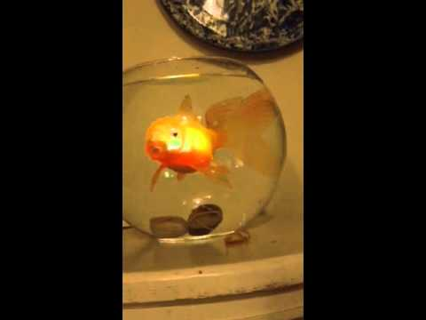 Koi toy changes color when it\'s underwater - YouTube