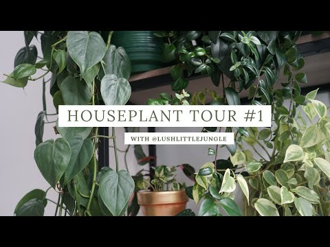 house plant tour // instagram edition #1 @lushlittlejungle
