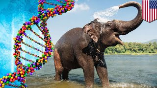 Zombie gene: Elephants protected from cancer by reborn gene - TomoNews