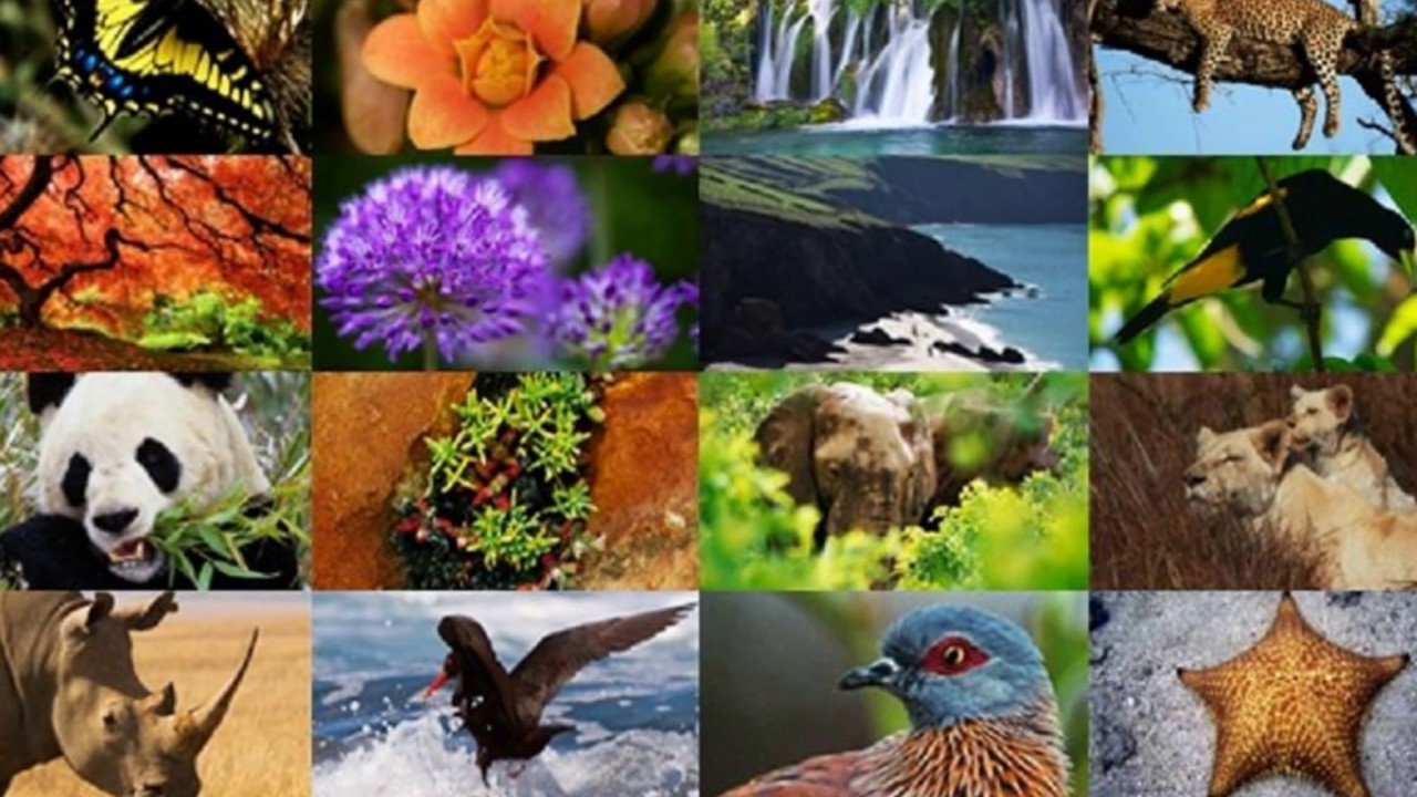 La Biodiversidad..!! :) Hermosas Imagenes