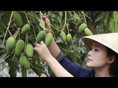 生芒果可以做菜,腌生芒果,炒脆肚都值得尝尝【滇西小哥】