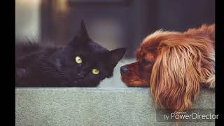 10+ Awesome And Funny Photos of Cats and Dogs