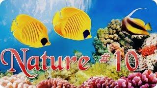 Nature #10  Подводный мир  Животные  Природа  Красивое видео  Animal videos
