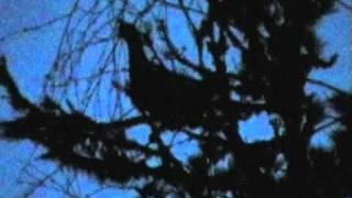 Глухариные песни. Hunting in Russia
