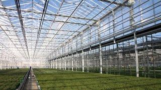 Budowa szklarni + pełne wyposażenie / Greenhouse turn key project / GreenTeam