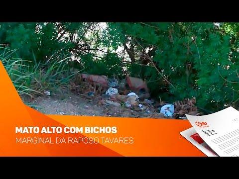 Mato alto com bichos na marginal da Raposo Tavares  - TV SOROCABA/SBT