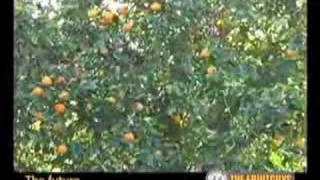 Organic California Orange Farming with the Blue Heron Farm