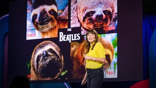 Sloths! The strange life of the world's slowest mammal | Lucy Cooke