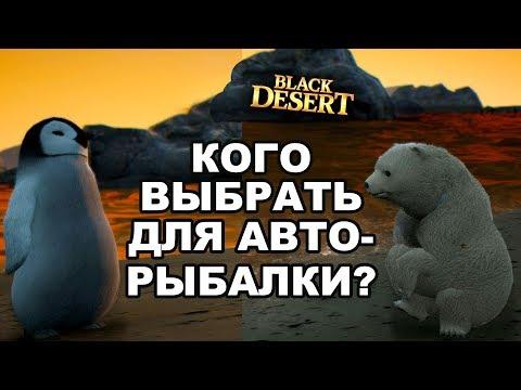 🐠 Медведь или пингвин? Питомец для авто-рыбалки в Black Desert