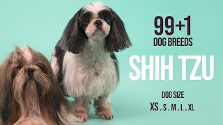 Shih Tzu / 99+1 Dog Breeds