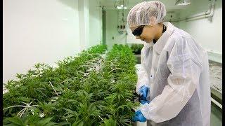 Local marijuana producer hiring